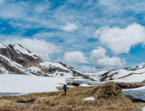 Escuchemos a la Naturaleza: una reflexión desde las alturas del Cordón del Caulle – ENDÉMICO